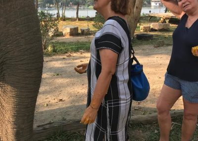 Présentation des éléphants Baan Mama