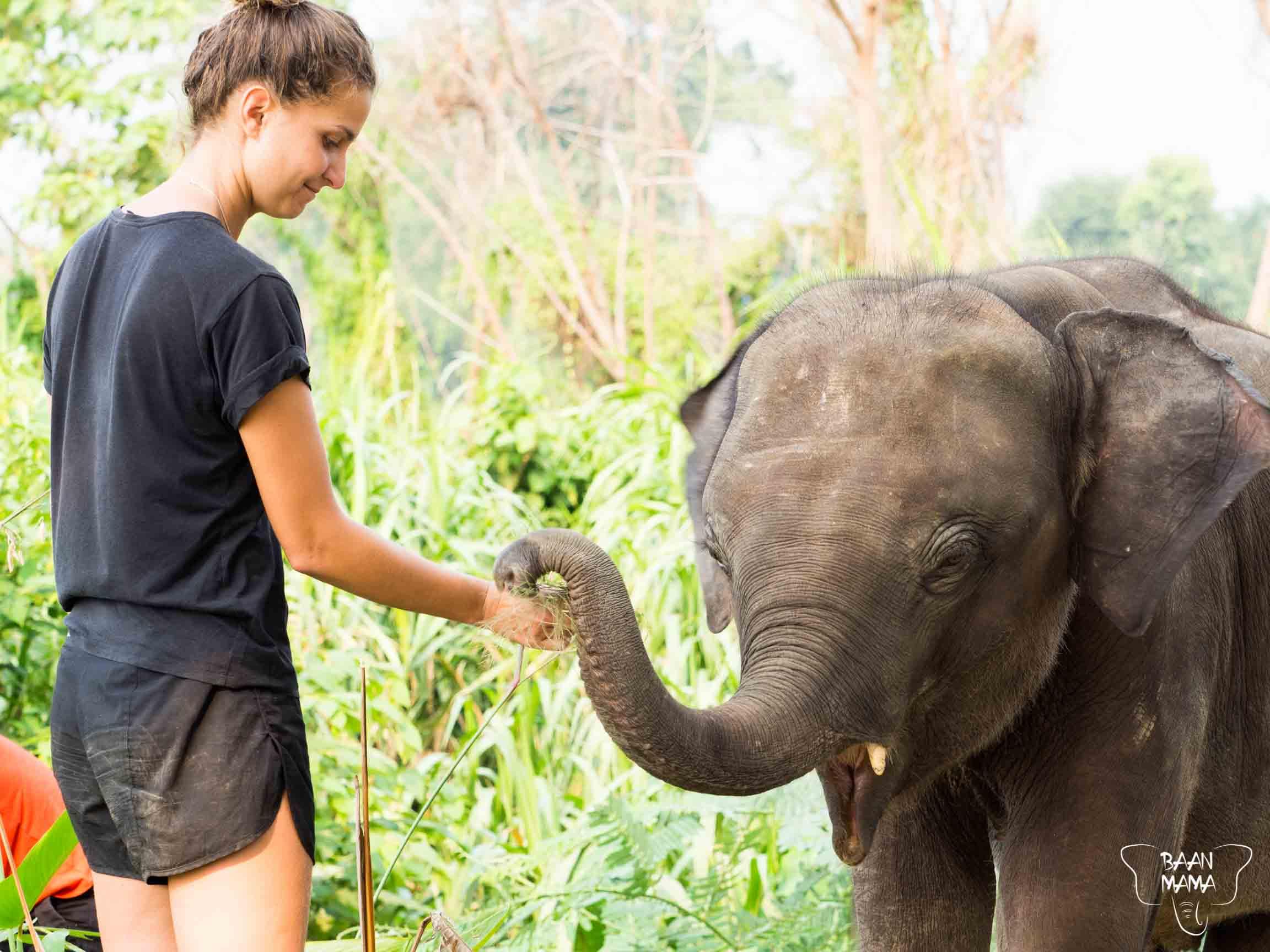 Volontariat 2019 Baan Mama Elephant Kanchanaburi Thailande