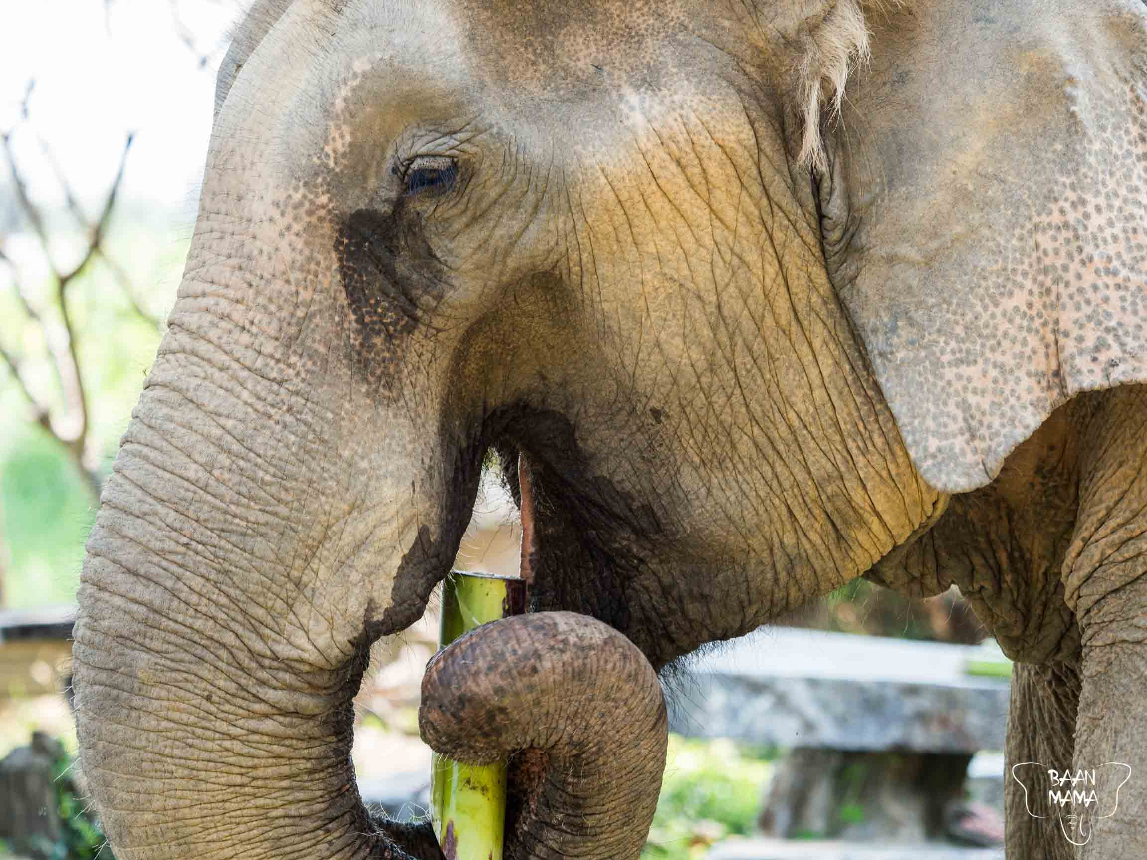 Formule Baan Mama 2019 Elephant Kanchanaburi Thailande