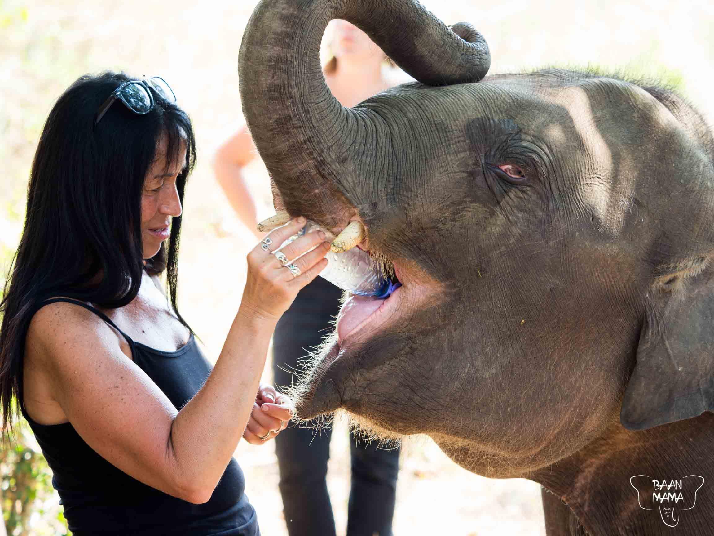 Volontariat 2019 Baan Mama elephant