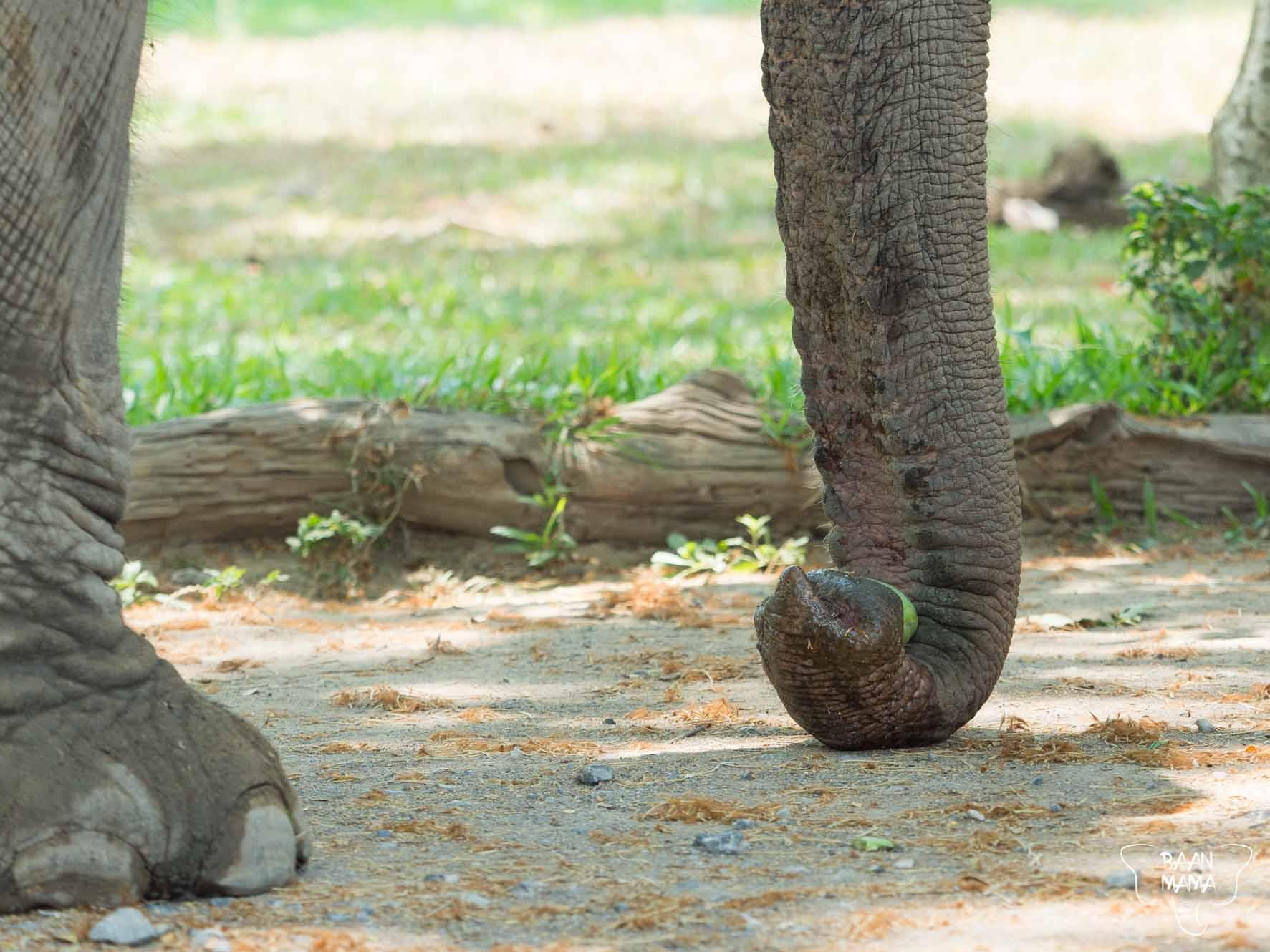 Formule Baan Mama 2019 Elephant