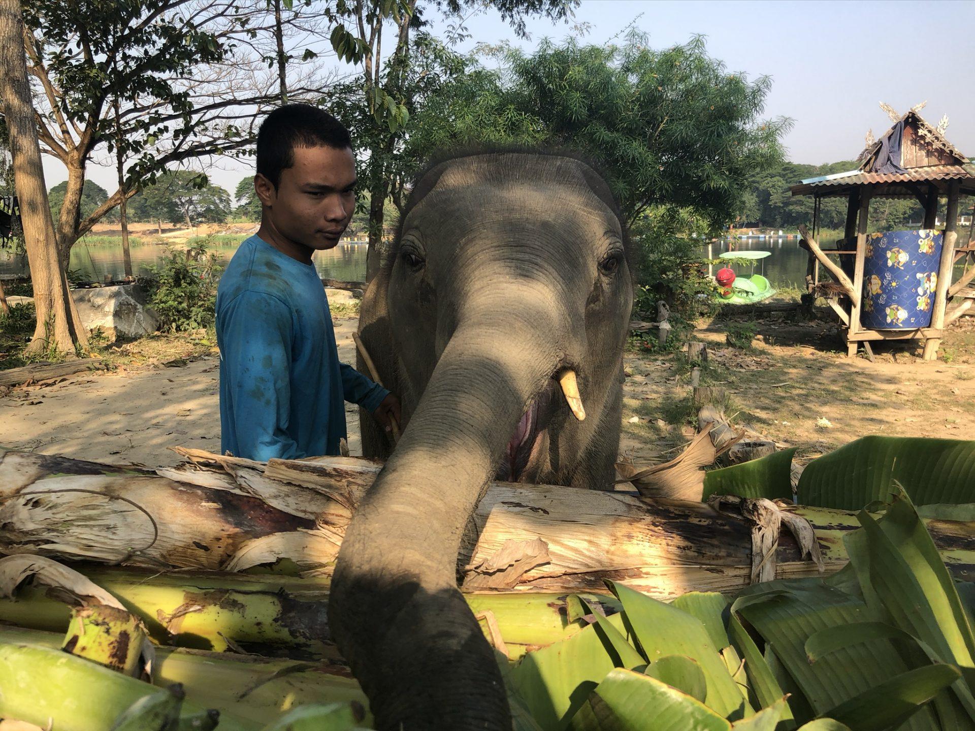 Baan Mama Elephant Thailande Kanchanaburi